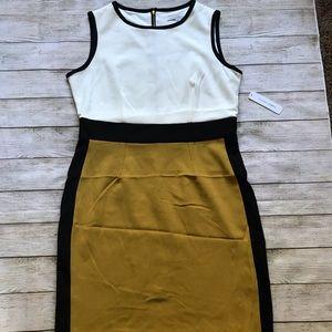 NWT Sandra Darren Dress Size 12